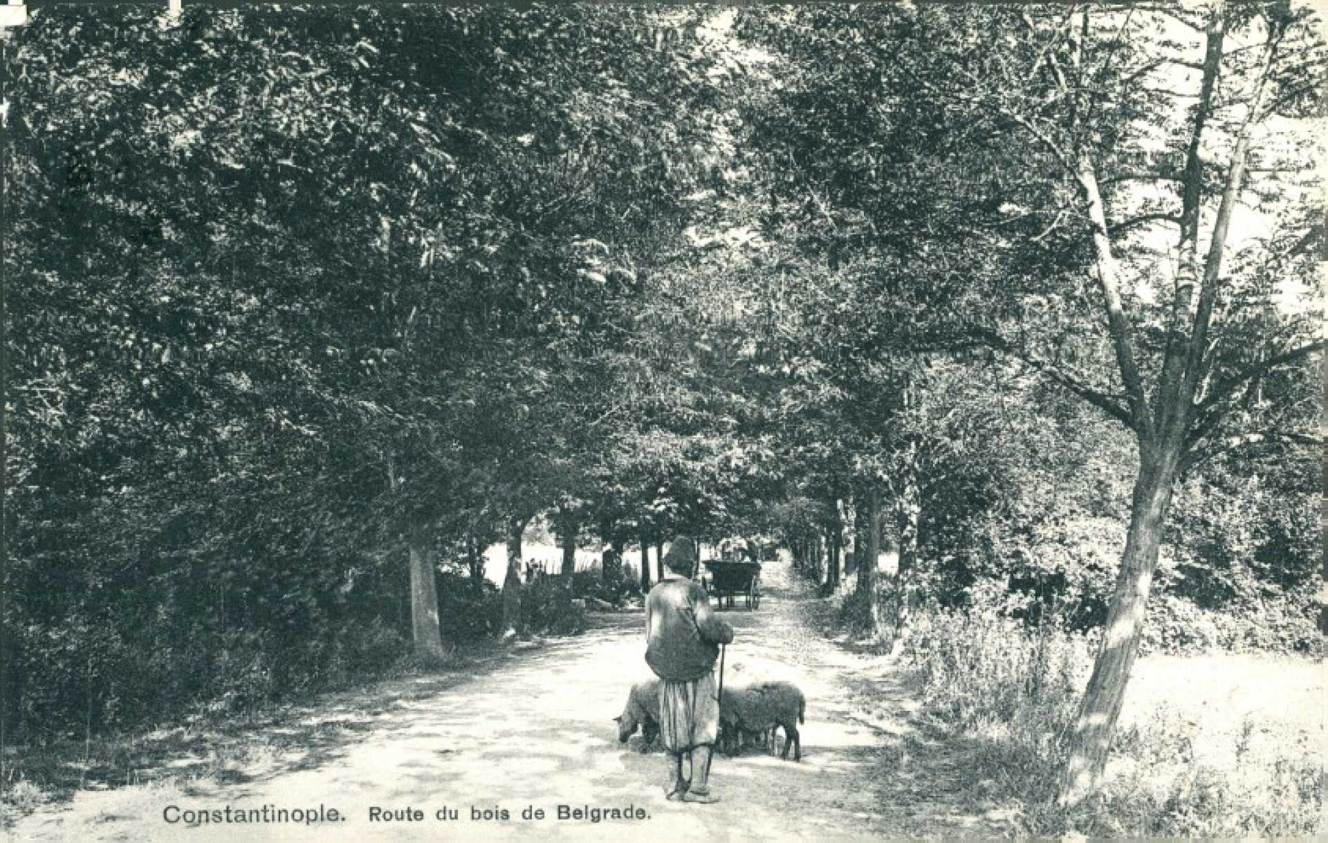 Route du bois de Belgrade