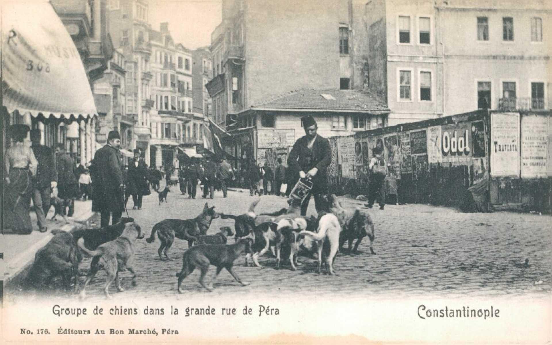 Groupe de chiens dans la grande rue de Pera
