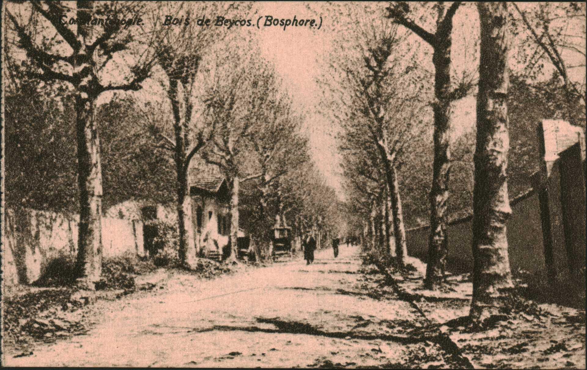 Constantinople – Bois de Beycos.(Bosphore)